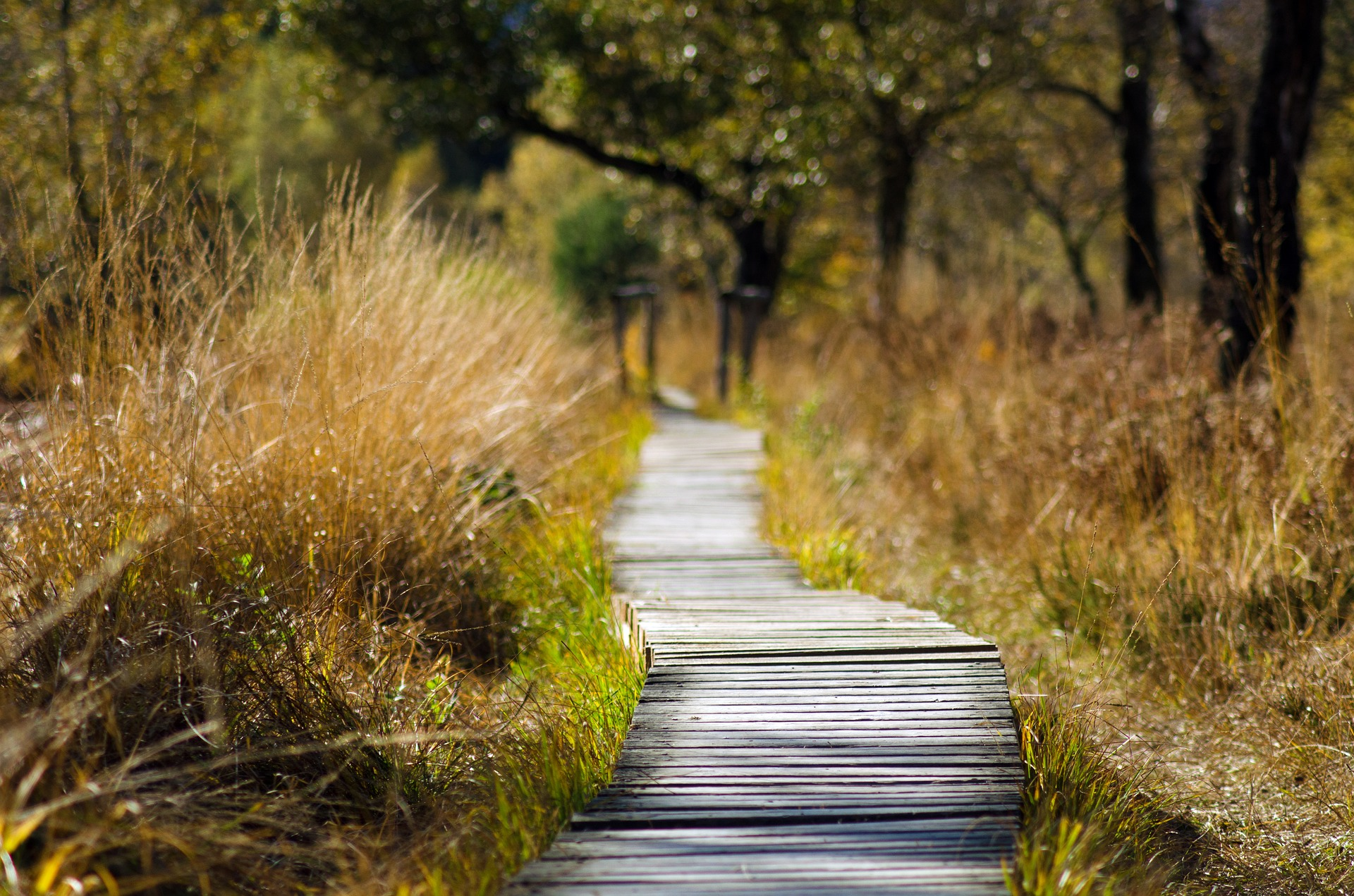 Austin has many peaceful park trails that are ideal for daily running routines.